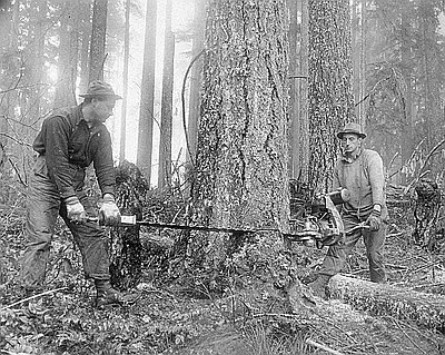 Timbermen Using Chainsaw, Lacomb // OrHi 92740